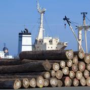 L'envol spectaculaire des exportations de grumes et ses dangers