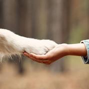 Seul un amoureux des chiens aura 10/10 à ce test de français