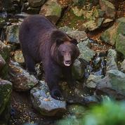Au zoo de La Flèche, le rêve ininterrompu de l'ours Ivan