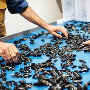 Mytilimer, cette PME bretonne pour qui l'export doit rimer avec écologie