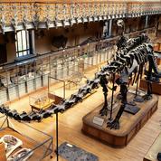 Un dîner au Muséum d'histoire naturelle face à un tyrannosaure