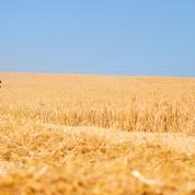 Les agriculteurs veulent des prix plus hauts en rayon