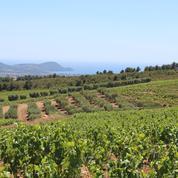 La Suffrène, une idée de l'avenir du vin