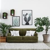 Les plantes d'intérieur sont-elles purificatrices d'air?