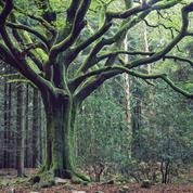 Dans la forêt de Brocéliande, sur les traces de Merlin