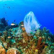 Quand le plastique des océans finit en rayons