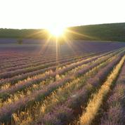 Comment L'Occitane sécurise ses matières premières