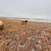 Sibérie: un parc préhistorique attend ses mammouths
