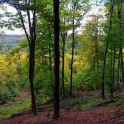 En été, 2,1°C de moins dans les forêts d'Europe