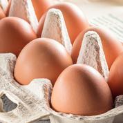 La chute de la demande d'œufs bio met la filière en difficulté