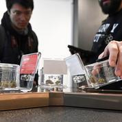 Canada: bilan mitigé de trois ans de légalisation du cannabis