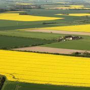 La piste d'une agriculture plus intensive pour mieux protéger la biodiversité