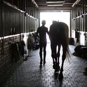 Les métiers du cheval recrutent: plus de 1000 offres d'emploi sont à pourvoir
