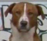 Le chien de Tolbiac.