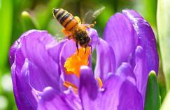 Allergie aux pollens : êtes-vous prêt ?