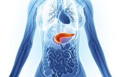 Cancer du pancréas: une course pour gagner du temps