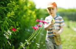 Un lien possible entre insecticides et troubles du comportement chez l'enfant