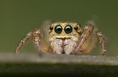 Du venin d'araignée peut protéger le cerveau après un AVC