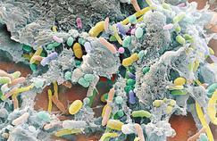 Cancer : quand la guérison se lit dans la flore intestinale