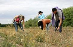 Médecine par les plantes : attention aux confusions malheureuses !