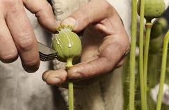 Les dérivés de l'opium, des molécules antidouleur au potentiel addictif très fort