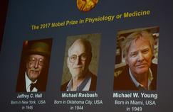 Le Nobel de médecine 2017 pour la découverte de l'horloge biologique