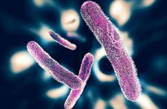 Six questions sur l'épidémie de salmonellose liée au lait contaminé