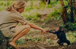 Jane Goodall: «Les chimpanzés m'ont appris à quel point l'homme est arrogant!»