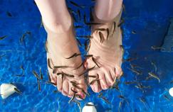 Après une «fish pédicure», une femme a perdu des ongles de pied