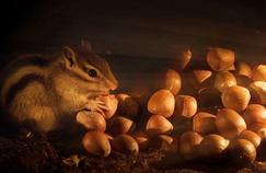 Royaumes secrets ou la vie cachée des petits animaux sur France 5