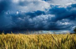 Une personne sur neuf souffre de la faim dans le monde selon la FAO