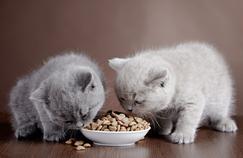 Comparatif croquettes pour chaton : notre sélection de 4 modèles