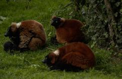 RMC Découverte dans le quotidien du zoo de Doué-la-Fontaine