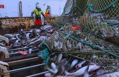 Additifs, surpêche, élevage : France 5 enquête sur le cabillaud