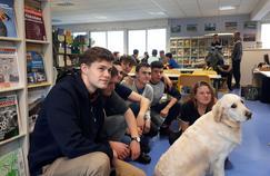 Ce lycée accueille un chien pour rétablir le lien avec les élèves