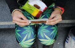 Cannabis: une teneur élevée en THC augmenterait le risque de troubles mentaux