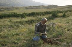La bataille du cèdre (Ushuaïa TV), pour reboiser les montagnes libanaises