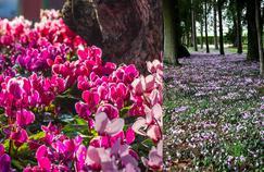 Désherber son jardin avec... des fleurs