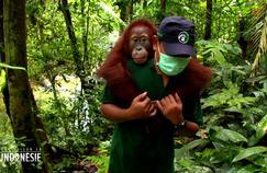 À la découverte de la faune menacée d'Indonésie sur France 4