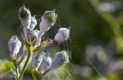Sachez reconnaître les parasites de vos plantes