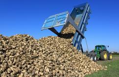 Comprendre cette «crise du sucre» qui frappe les betteraviers français