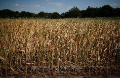 Sécheresse: les restrictions d'eau pèsent sur les agriculteurs