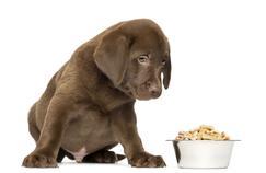 Croquettes pour chiot: comparatif des meilleures croquettes?
