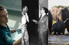 L'Œuvre sans auteur, The Wall,Elephants... Votre plateau télé du week-end