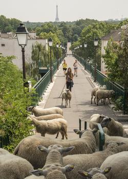 Sur la passerelle de l'Avre, créée par Gustave Eiffel qui relie Saint-Cloud au bois de Boulogne.
