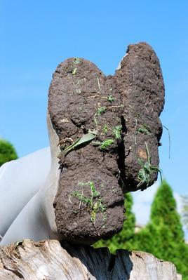 En faisant «floculer» les argiles, la terre collera moins à vos bottes...