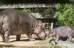 Une saison au zoo en prime time sur France 4