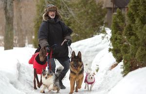 Programme TV - Dans la vie d'un chien - Le meilleur ami de l