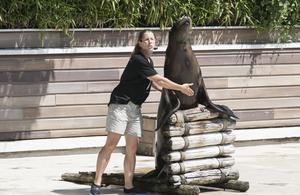 Une saison au zoo souffle ses cinq bougies
