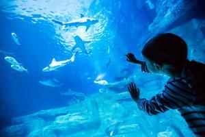 L'Aquarium deParis(XVI <sup>e</sup>).
